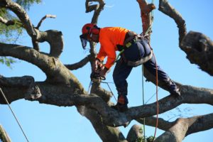 tree-lopping-margate-5