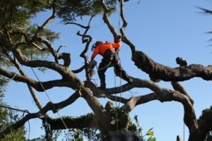 Tree lopping Margate